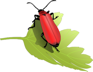 Are Bugs On Kale Safe To Eat